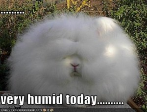 This is how humid it felt this morning!